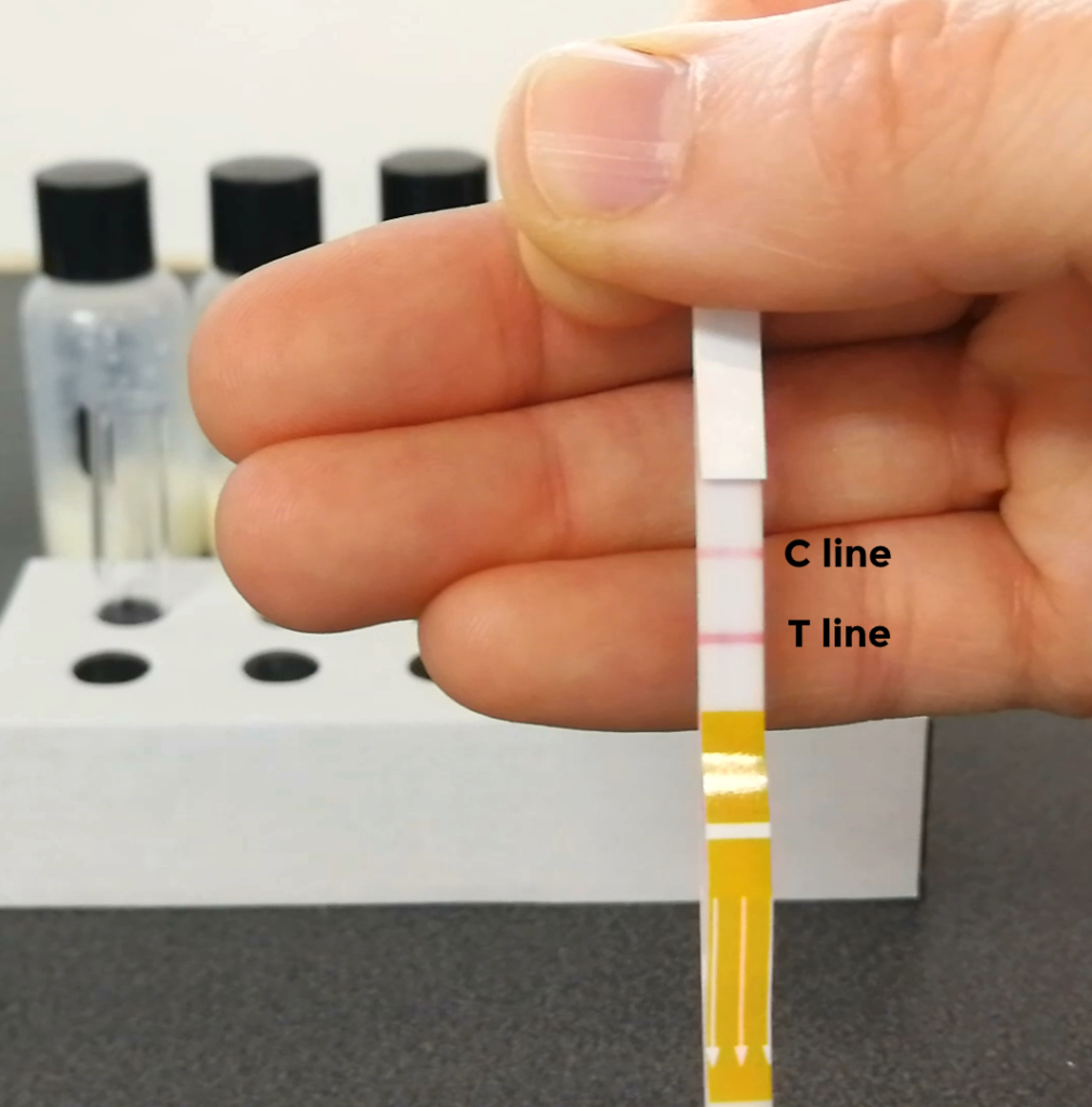 In this study, we tested each milk sample twice in P4Gold. This stick shows a Low progesterone result.
